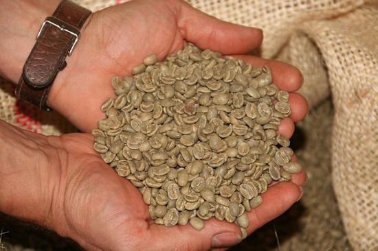 Zelená káva vám pomůže shodit přebytečná kila