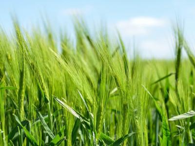 Přírodní bio produkty a kosmetika jsou nejlepší