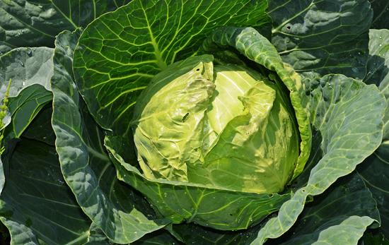 Zdravý jídelníček: Zelí
